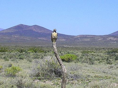 Birdwatching en Malargüe, Llancanelo