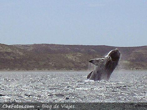 Ballena fuera del agua