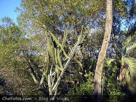 Mogotes de bosque nativo