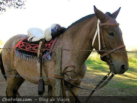 Foto de un caballo en estancia Argentina