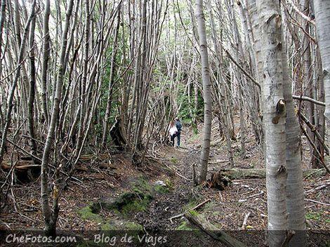 Hiking por senderos del parque nacional