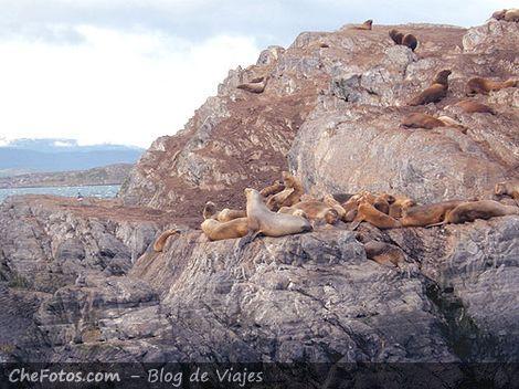 Colonia de Lobos Marinos, Ushuaia