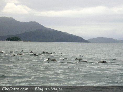 Delfines, golfinhos en Ilha Grande