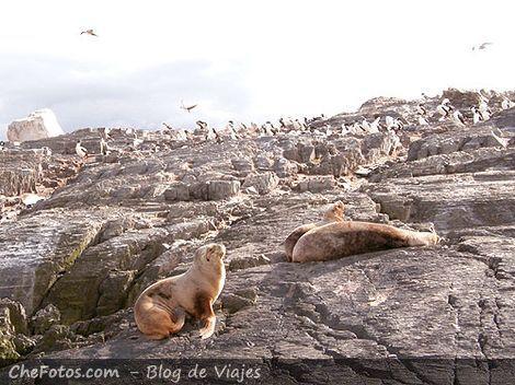 Avistaje de fauna marina en Ushuaia