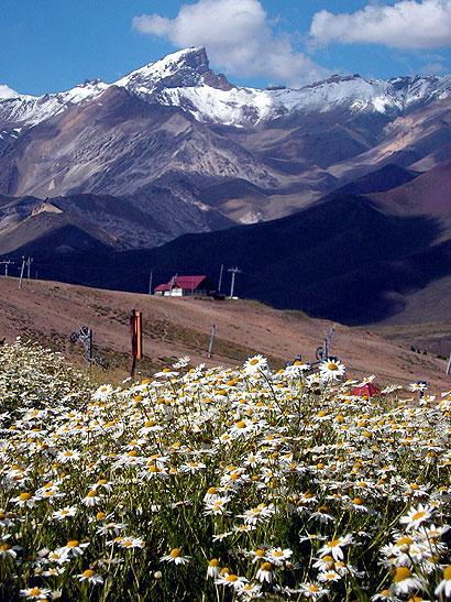 Campos de margaritas en la montaña