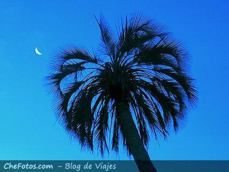 La luna, la palmera Yatay, Entre Rios