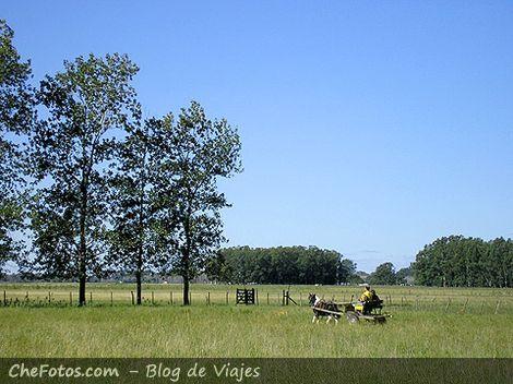 Paseo en sulky por el campo