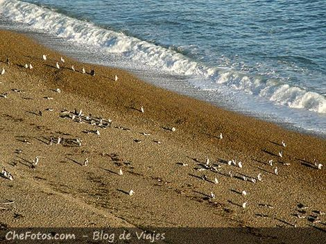 Pingüinos en las playas de Monte León