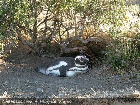 Pingüinera Parque Nacional Monte León