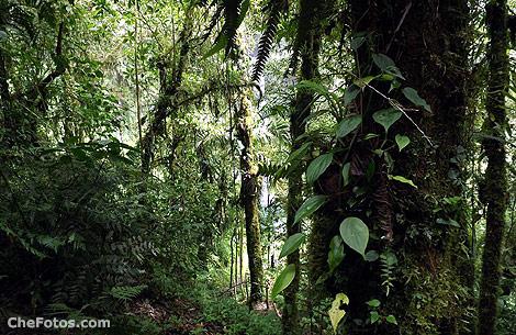 selva-boquete-panama