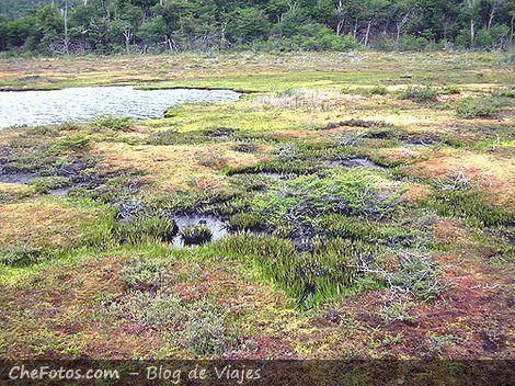Turbales patagónicos