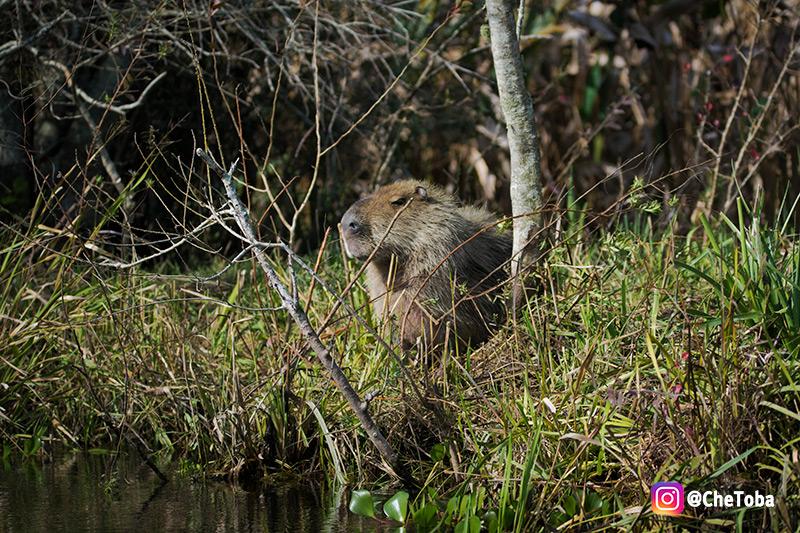 Fauna de los Esteros del Iberá