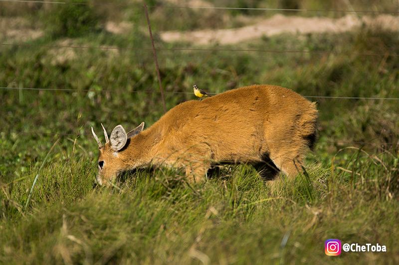 Animales que podemos encontrar en los esteros del iberá