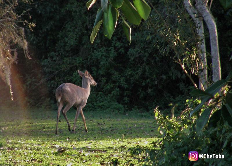 Vida Silvestre Esteros del Iberá