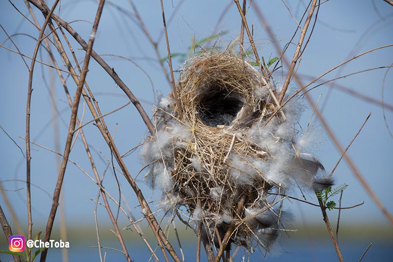 Observacion de aves en Iberá