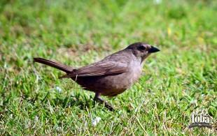 Viajando sin salir de casa - #BirdWatching II 21