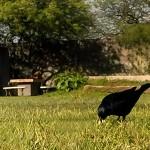 Viajando sin salir de casa – #BirdWatching II
