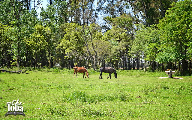 Caballos en Estancia Yucat Cordoba