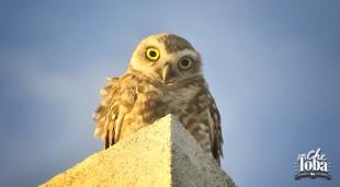 Algunos consejos para salir a fotografiar aves - #Birdwatching III 18