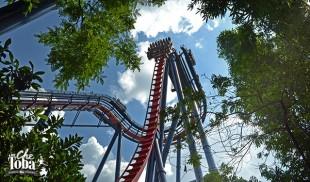 Montañas Rusas de SeaWorld Orlando 25