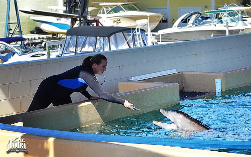 nocholas-dolphin