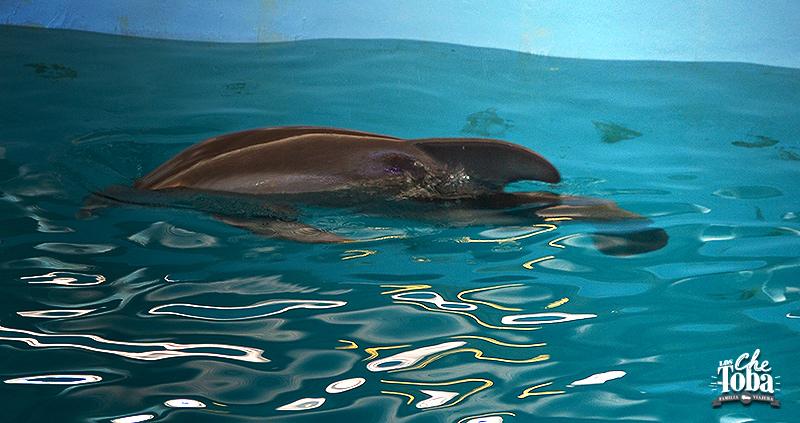 winter-delfin-sin-cola