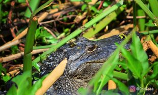 Navegar por un pantano en La Florida 17