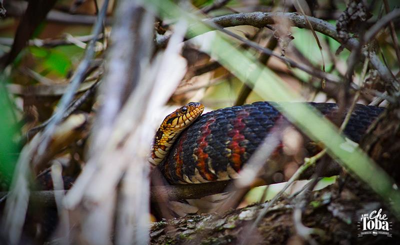 serpientes-estado-de-la-florida-usa