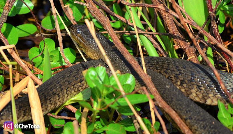 snake-cypress-lake