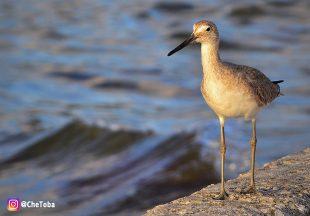 Reserva de vida silvestre en Pine Island, Florida 17