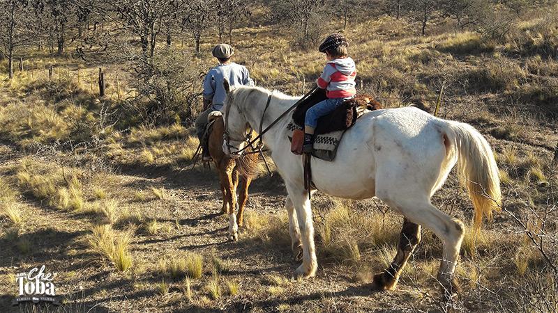 caballos-sierras-de-cordoba