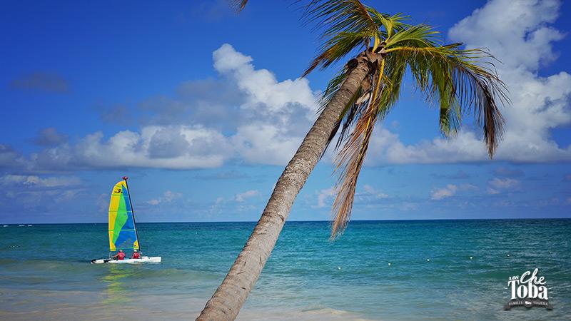palmera-del-caribe