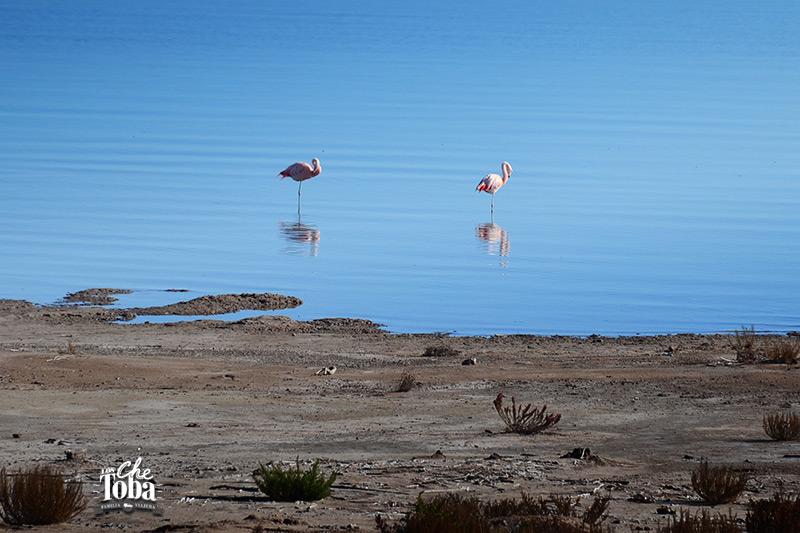 Qué ver (y hacer) en la Laguna de Mar Chiquita, Córdoba 2