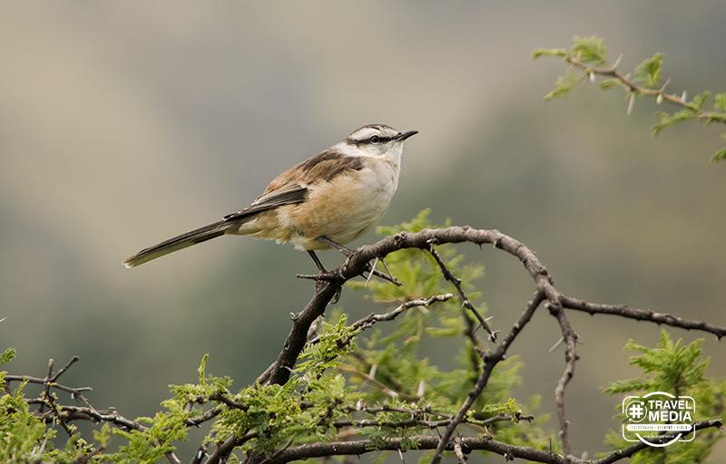 Turismo de Aves en Merlo