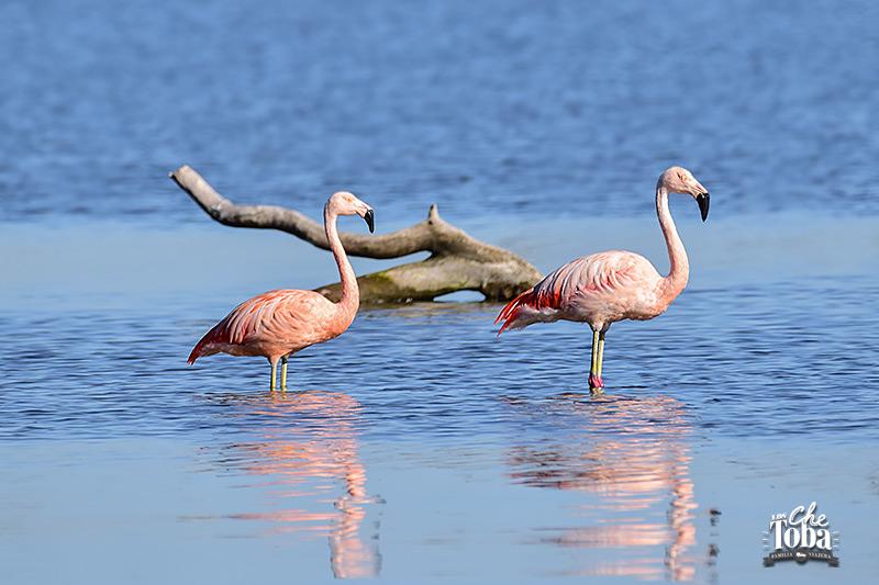 Qué ver (y hacer) en la Laguna de Mar Chiquita, Córdoba 6