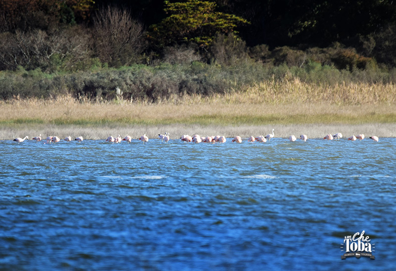 Qué ver (y hacer) en la Laguna de Mar Chiquita, Córdoba 22