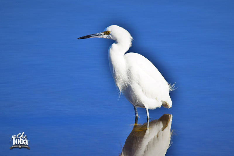 Qué ver (y hacer) en la Laguna de Mar Chiquita, Córdoba 9