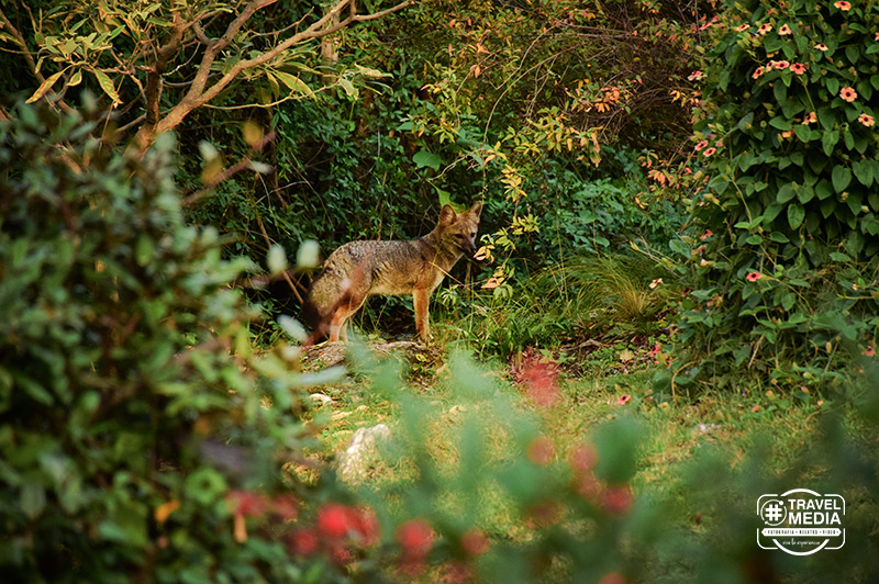 Vida Silvestre en la Villa de Merlo, San Luis