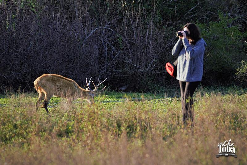 Safaris fotograficos