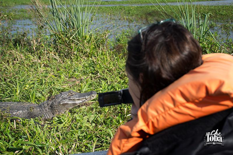 Safari fotográfico Esteros del Iberá