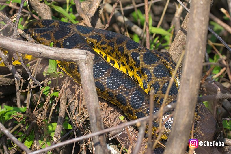 Serpientes en Iberá