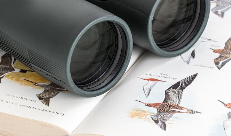 Qué binoculares comprar para la observación de aves?