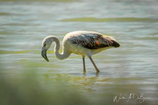 Avistaje de Aves en Mar Chiquita, Córdoba 6