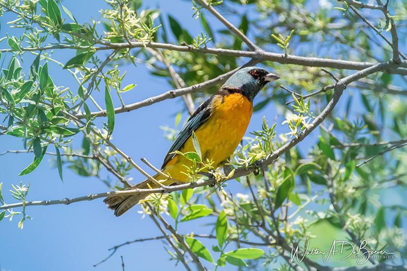 Naranjero ave