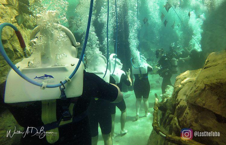Discovery Cove Orlando - Tour 360° VR 6