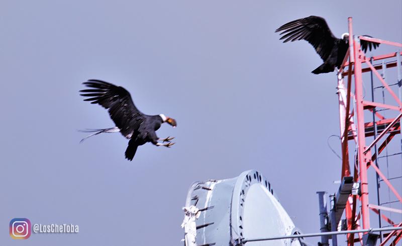 Turismo de Aves: Avistaje de Cóndores en Merlo
