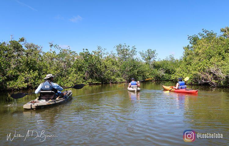 Excursiones en kayaks por la zona de Cocoa Beach 3