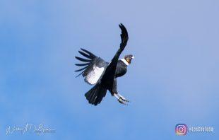 Turismo de Aves: Avistaje de Cóndores en Merlo 4
