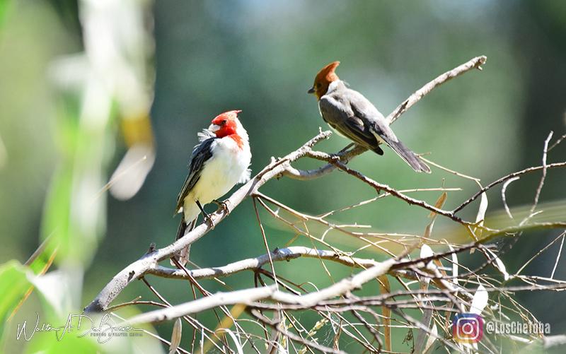 Safaris fotográficos y observación de aves 4