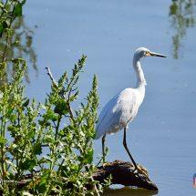 Avistaje de aves en Mar Chiquita + Salida embarcada 29